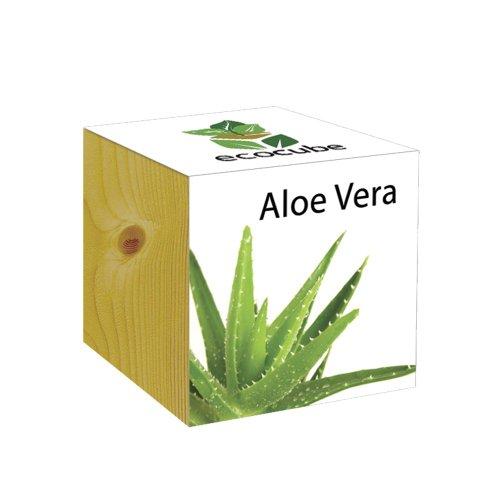 ecocube Holzwürfel - Aloe Vera