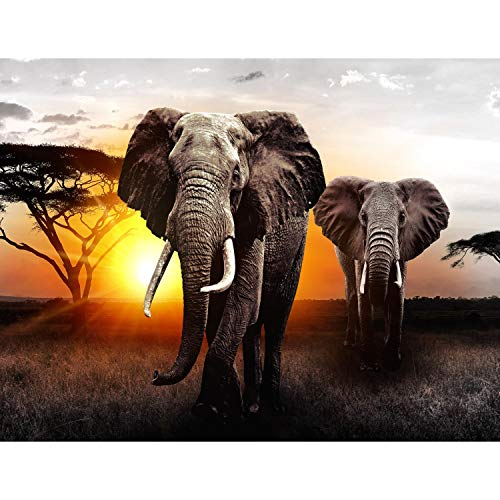 Runa Art Fototapete Afrika Elefant Sonnenuntergang Modern Vlies Wohnzimmer Schlafzimmer Flur - made in Germany - Grau Orange 9236010a
